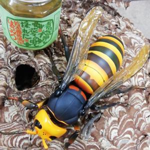 昆虫グルメ!スズメバチを食べるって本当!?