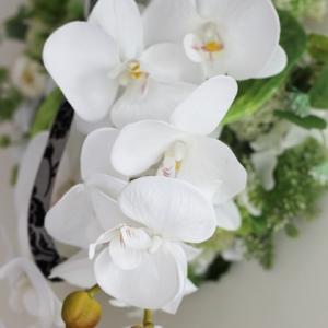 【胡蝶蘭のリース】流れる様な豪華な胡蝶蘭 タイで撮影の蘭のお花のお写真と