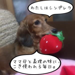 犬と私の会話⑨