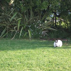 ウサギ再び