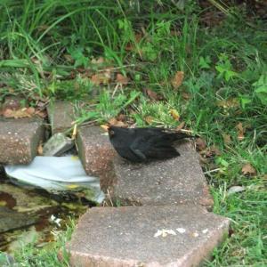 鳥達の様子に変化 その1