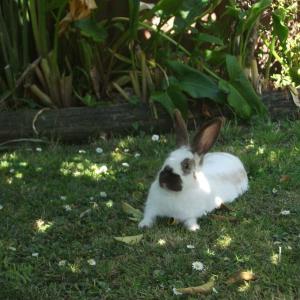 ウサギ、またまた