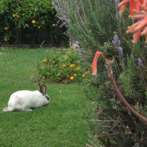 ウサギ入りびたり