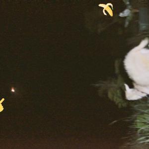 【ザワワ村】開拓物語 第60話「ヤギとH2Bロケット最終号機を見守り」
