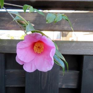 ★☆朝一・大和屋さんへ♪&春のお花・・・☆☆★