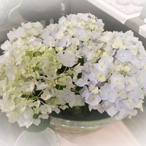 ★☆店内の紫陽花いろいろby 大和屋さん♪☆★