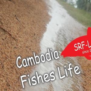 カンボジアの水辺
