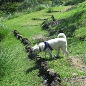 松川湖散歩