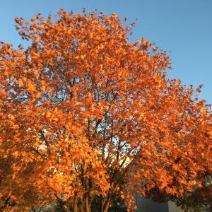 秋を楽しむのも・・