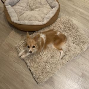 Luluの新しいベッド