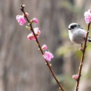 野鳥観察2