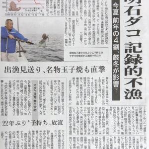 明石ダコ 記録的不漁(神戸新聞)
