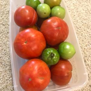 トマトと扇風機★暑いのでクーポン持ってArby'sへ