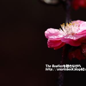 咲き始めの梅をアンダーで・・・・(前編)@青葉の森公園