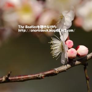 咲き始めの梅をアンダーで・・・・(後編)@青葉の森公園