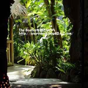 猛暑の中の熱帯植物園@稲毛花の美術館