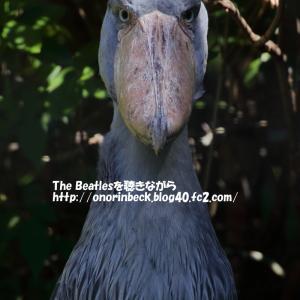 この顔にピンと来たら110番@猛暑の千葉市動物公園