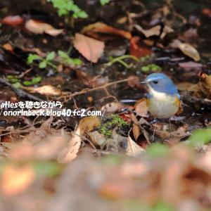幸せの青い鳥♪(後編)@21世紀の森と広場