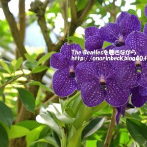 色んな熱帯のお花を・・(前編)@大町自然公園