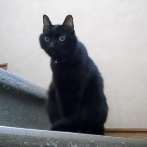 黒猫は可愛い
