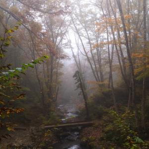 霧に覆われた森 宇津江48滝