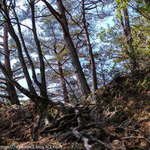 春の景色を眺めて 納古山