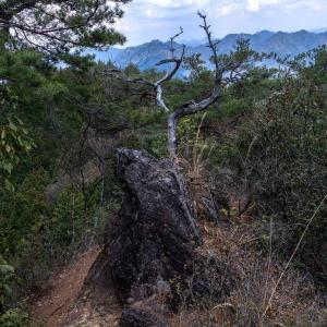 杉林の中の下り 納古山