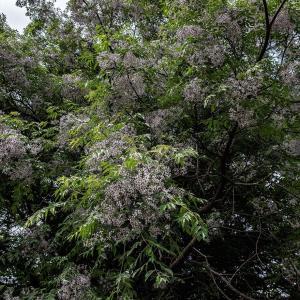 扶桑緑地公園散策(2)