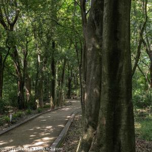 扶桑緑地公園散策(4)