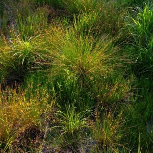 シンボルツリー 葦毛湿原