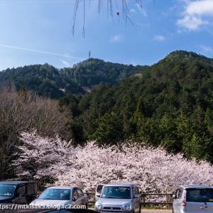 桜 百々ヶ峰