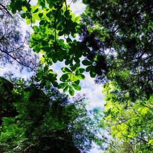心地よい空と展望 鳳来寺山
