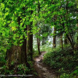林道へ 夏焼城ヶ山