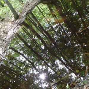 白神山地岳岱自然観察林