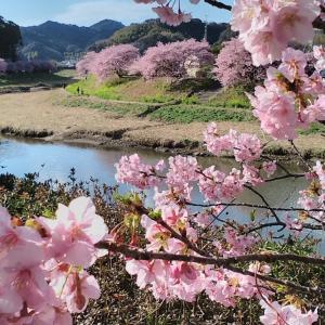 みなみの桜 2021 その4