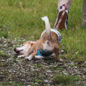 恍惚の犬。