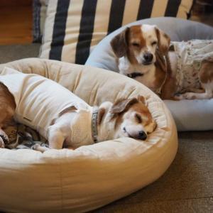 クールベッドを使いませんか。