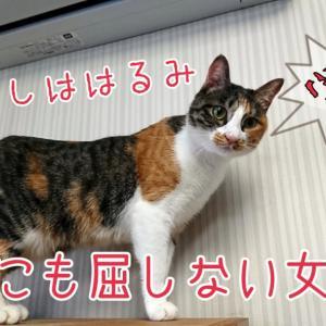 【女帝】はるみさんトライアルへ!【出発】
