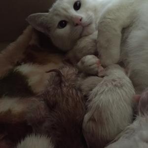 白猫迷子ちゃん、母になる。