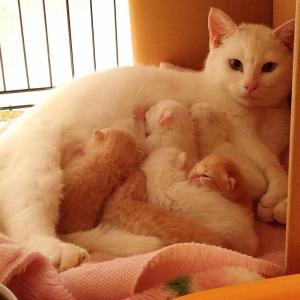 白猫こごみさんと茶トラたまよさん。