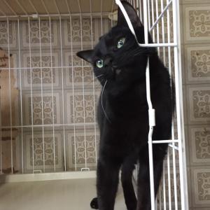 黒猫 泰くんの近況です。