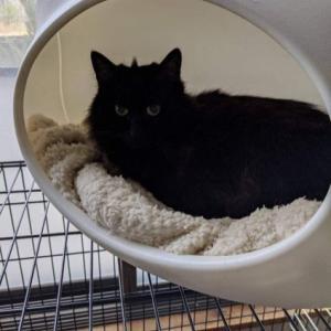 最長老 黒猫メアリーの病状。
