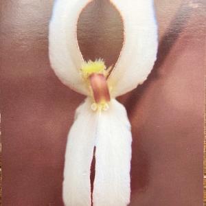 ワイルドフラワ―カード「根元的な生命力の回復」