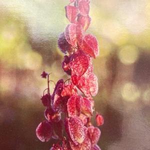 ワイルドフラワ―カード「心と神経の安らぎ」