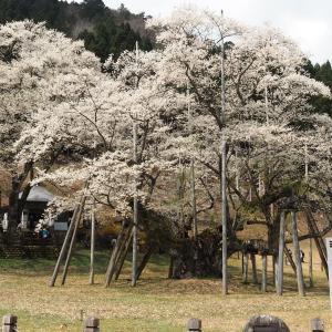 根尾谷の春と淡墨桜(2020年4月4日撮影)