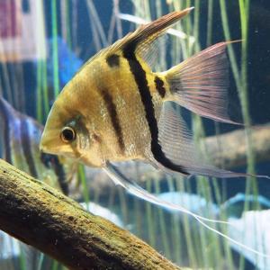 熱帯淡水の生き物(竹島水族館)2020年2月22日撮影