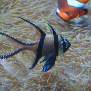 サンゴ礁の魚(名古屋港水族館)2019年1月12日撮影
