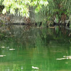 曽根城公園(ハリヨの池)と曽根川周辺(2020年5月9日撮影)