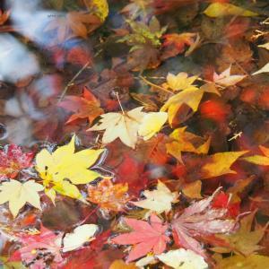 鳴谷山 聖宝寺の紅葉2020(11月23日撮影)