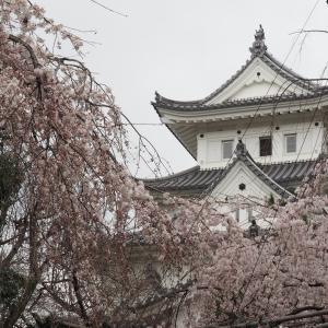 水都大垣の春2021(桜、野鳥、モクレンなど)